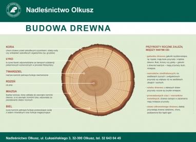 Tablice-edu-drzewa-2