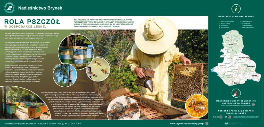 Brynek – tablica edukacyjna Pszczoły w lesie