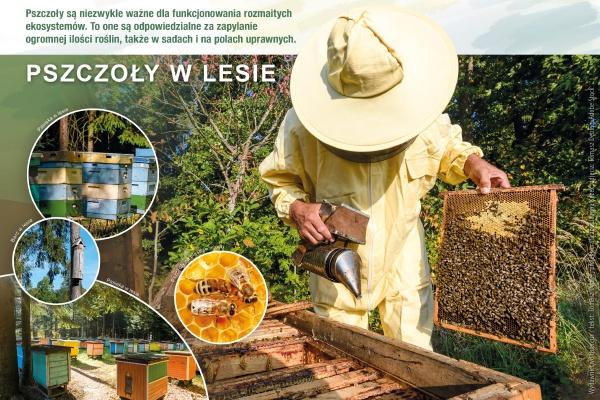 Pszczoły w lesie